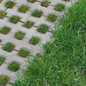 Екоплитка у парку. Салон тротуарної плитки «Melius» у Вінниці Фото